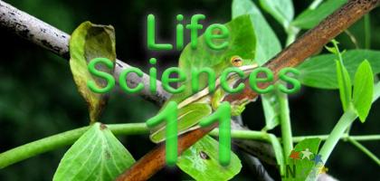Course Image WCLN Life Sciences 11 (BIO11) - Lynnes